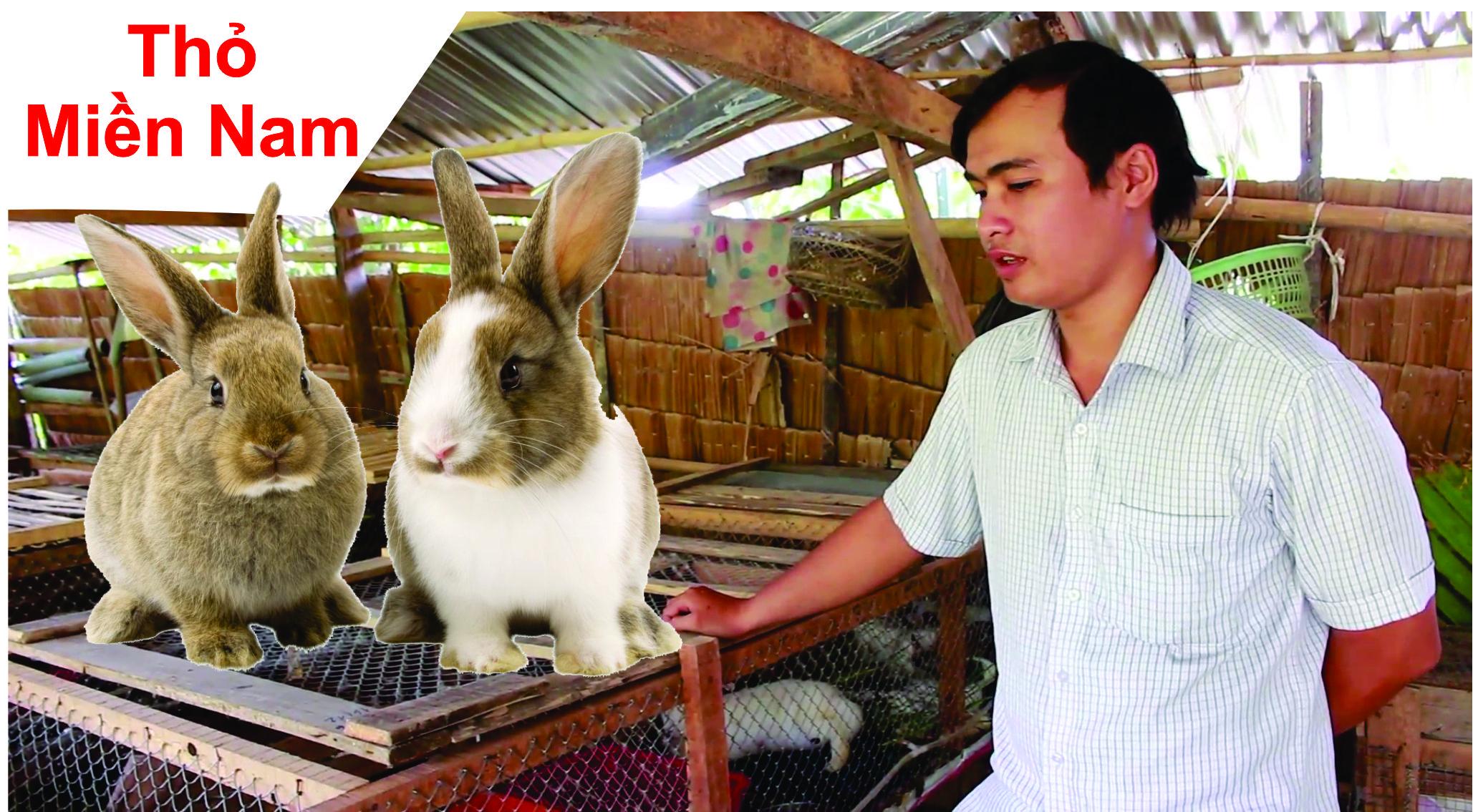 Mô hình chăn nuôi thỏ kết hợp trồng Bưởi Sạch ở Vĩnh Long