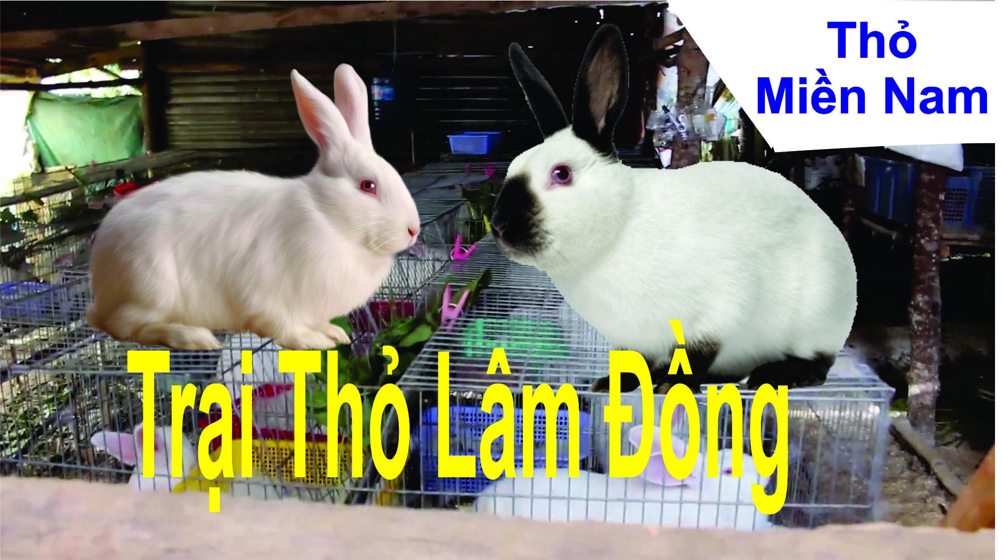 Mô hình chăn nuôi thỏ newzealand và Thỏ California ở Lâm Đồng