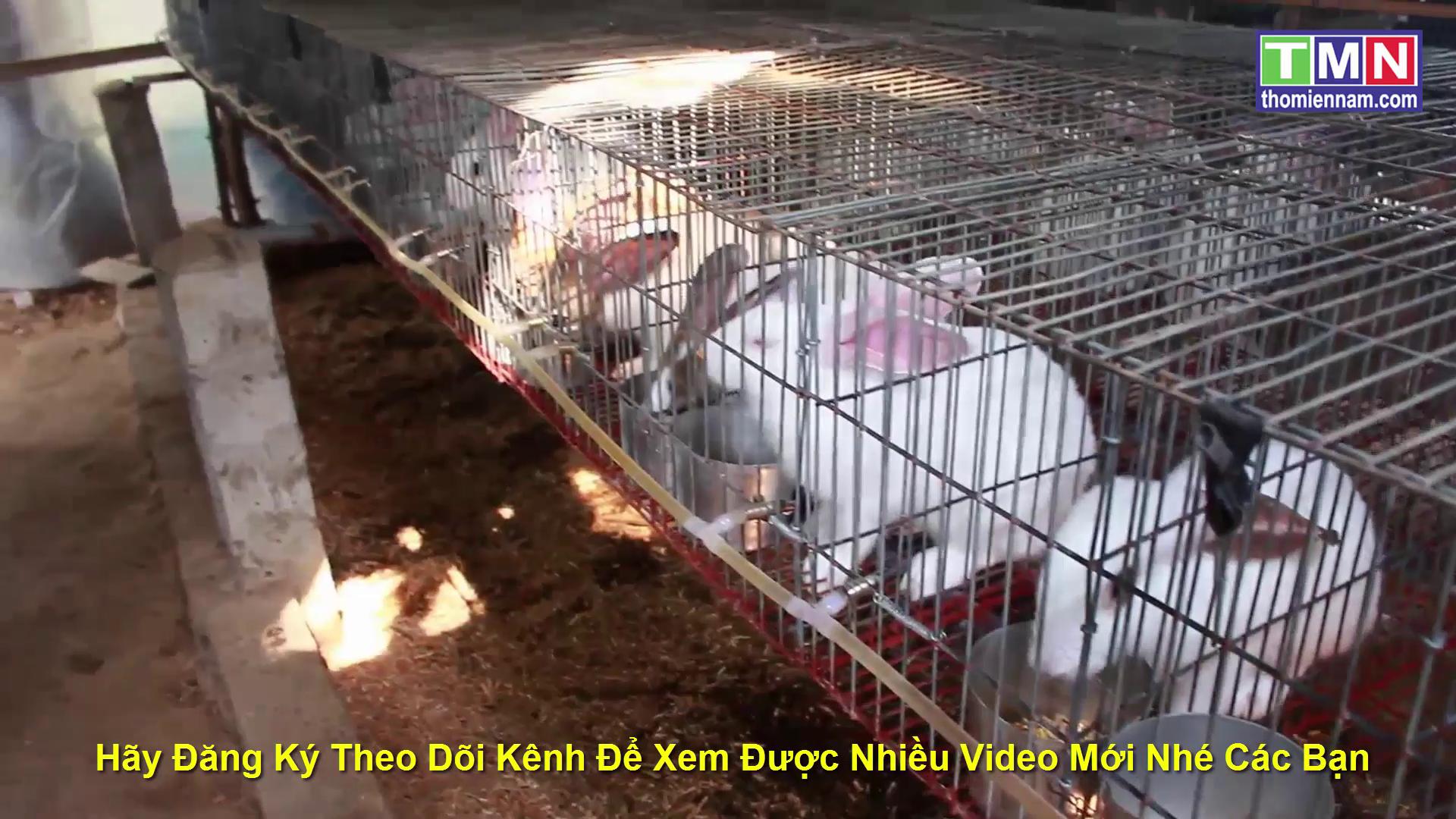 Mô hình chăn nuôi thỏ với rau lang và cây chuối hột