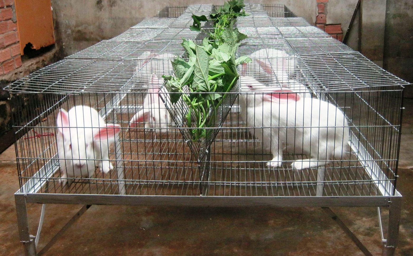 Kỹ thuật nuôi thỏ thịt tại nhà cải thiện kinh tế gia đình