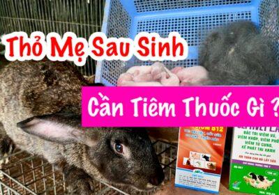 Kỹ thuật nuôi thỏ cơ bản tập 03